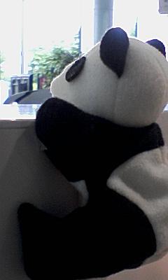 這い上がるパンダ