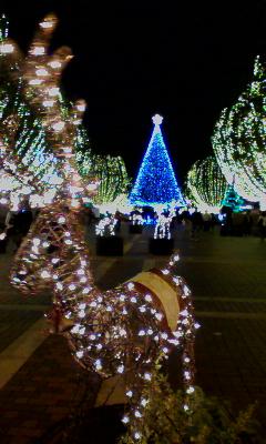 クリスマスみたい〜
