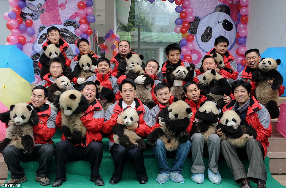 パンダ幼稚園に入園しました